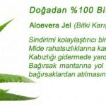 Aloe Vera Şurubu Faydaları