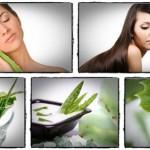 Aloe Veranın Tedavi Edici Etkileri