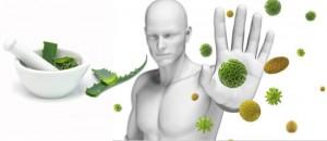 bağışıklık sistemini güçlendirmek için aloe vera