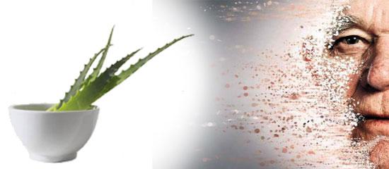 cilt kanseri için aloe vera