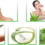 Aloe Veranın Hücre Yenileyici Özelliği